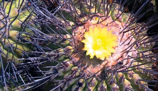 Muestra temporaria: Cactus. Plantas de América.