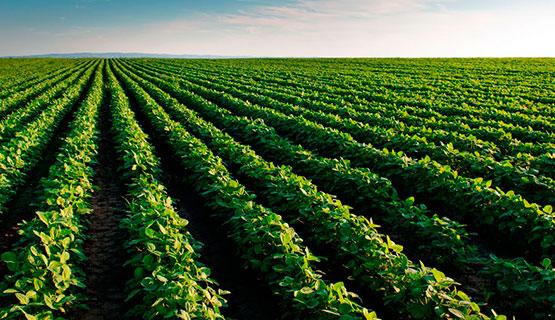 Walter Pengue participará en el encuentro Modelos agrícolas y sistemas alimentarios