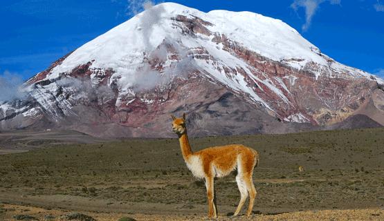 """Mateada Científica: """"Camellos sin joroba: vicuñas, ciencia y conocimiento ancestral"""""""