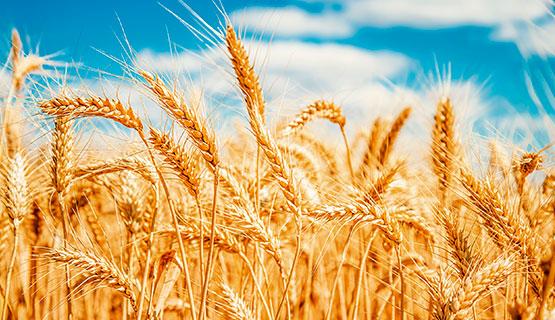 Sobre teras y semillas: la ciencia de datos al servicio del agro