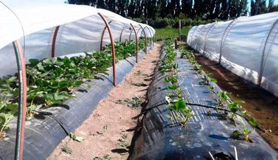 Plásticos y cultivos
